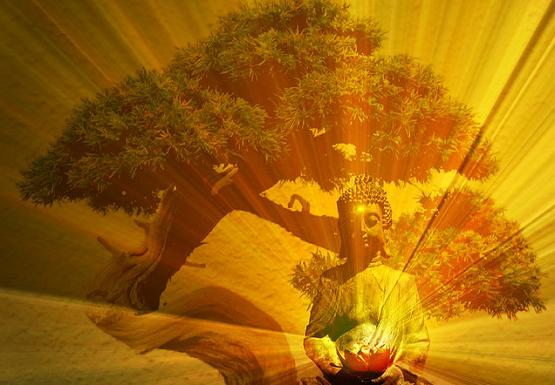 Tree-Meditation.png