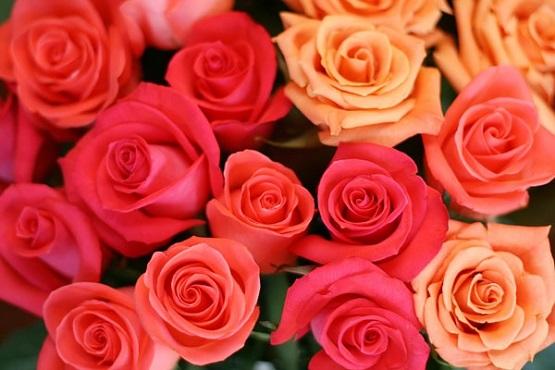2-rainbow-roses_orig.jpg