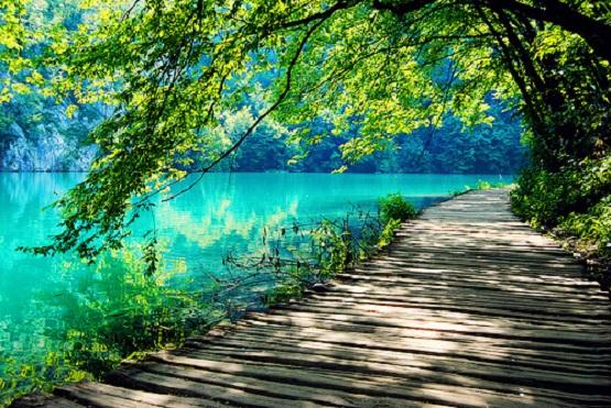 beautiful-amazing-nature-tree-water-lake-green-color-photo-photography-Favim.com-461737.jpg