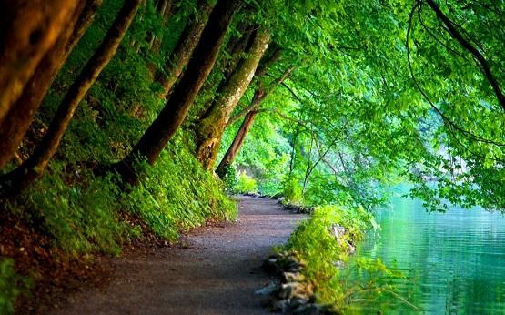 Beautiful_Path.jpg