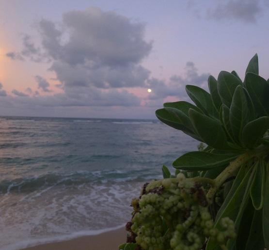 PHOTO TAKEN BY WISE OWL DONNA IN KAUAI