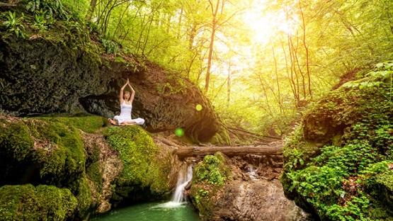 meditation-woods.jpg