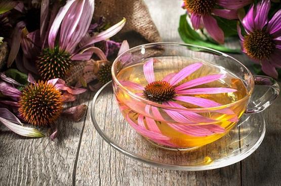 bigstock-Echinacea-purpurea-Cup-of-ech-74600008.jpg