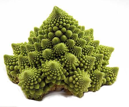 Die fraktale, sich ornamental und mathematisch berechenbare Natur. (Mandelbrot)