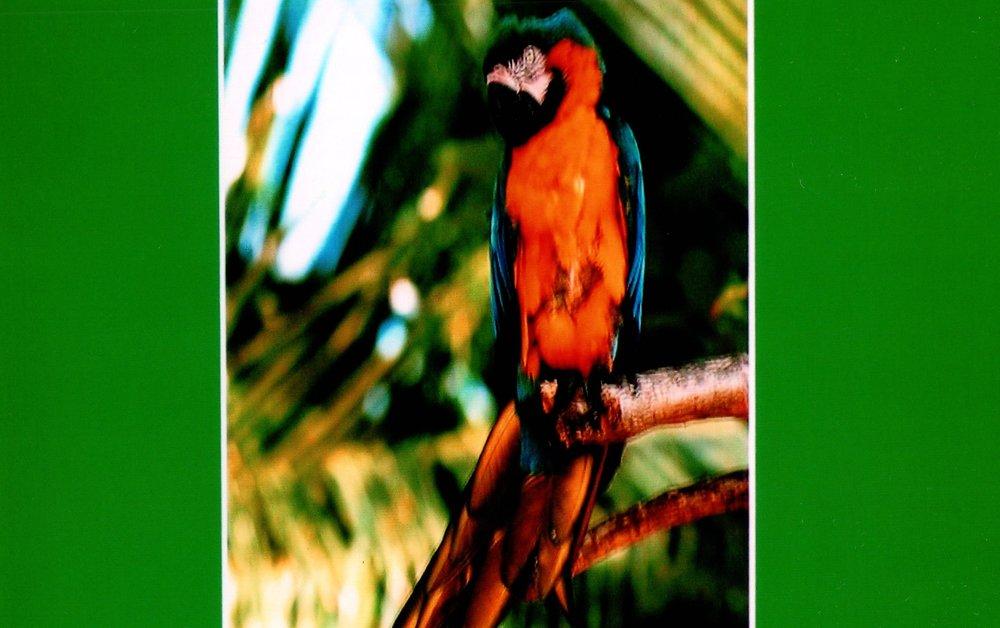 1_10_2005 - FRANK MOORE _BIRD_ PRESENTATION 3.jpg