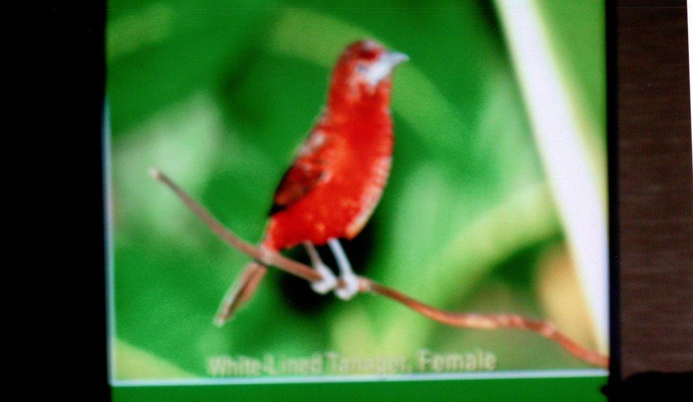 1_10_2005 - FRANK MOORE _BIRD_ PRESENTATION 5.jpg