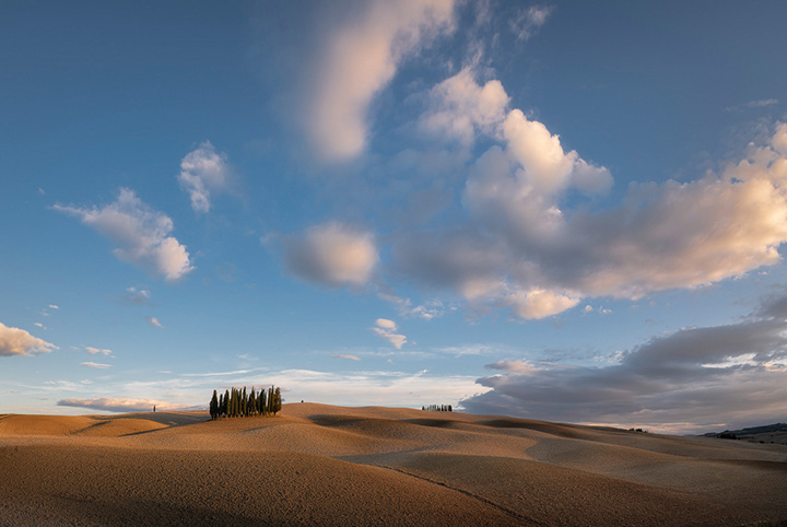 Tuscany Cypresses at Sunset