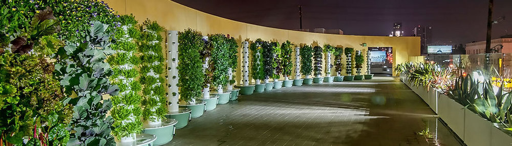 wallofplants.jpg