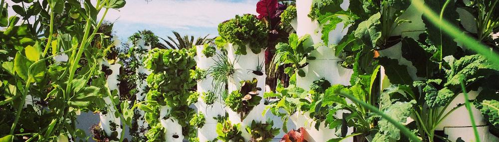 planttowers2.jpg