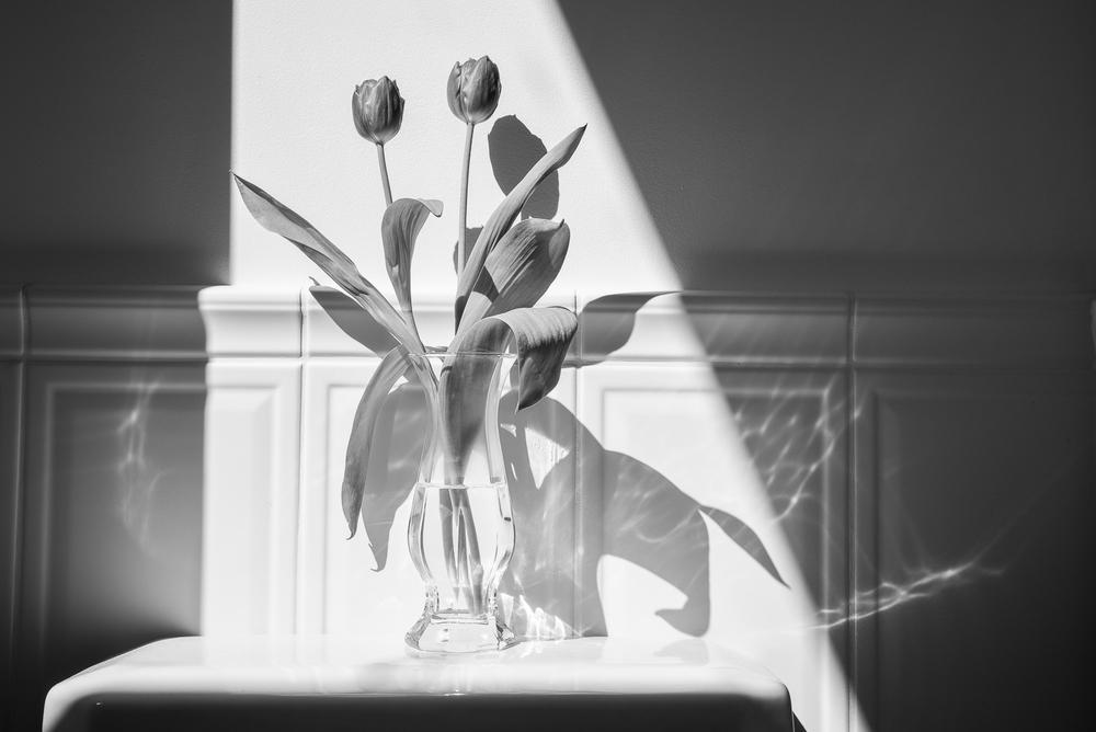tulips-in-bathroom-(1-of-1).jpg