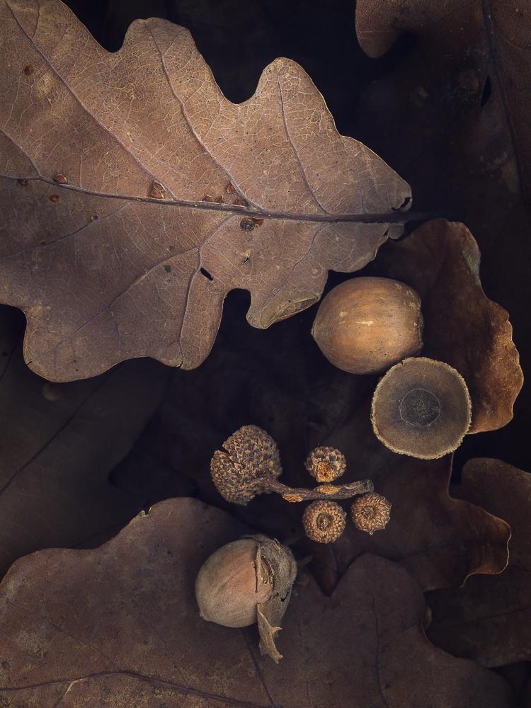 oak-(1-of-1).jpg