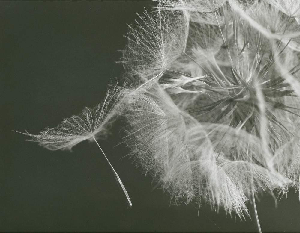 seed head.jpg
