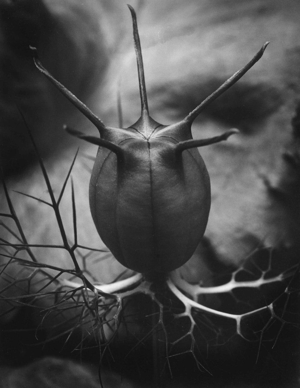 seed head (1 of 1).jpg