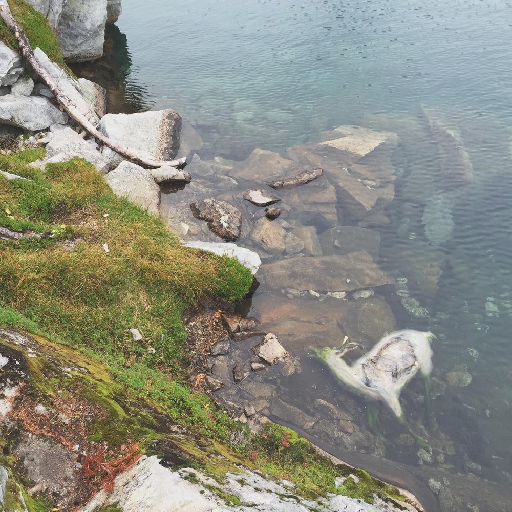 Minotaur Lake, WA
