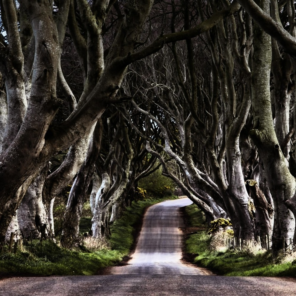 Ireland roadtrip is calling this summer.. who could resist a blast down this lane? Dark Hedges in Northern Ireland.