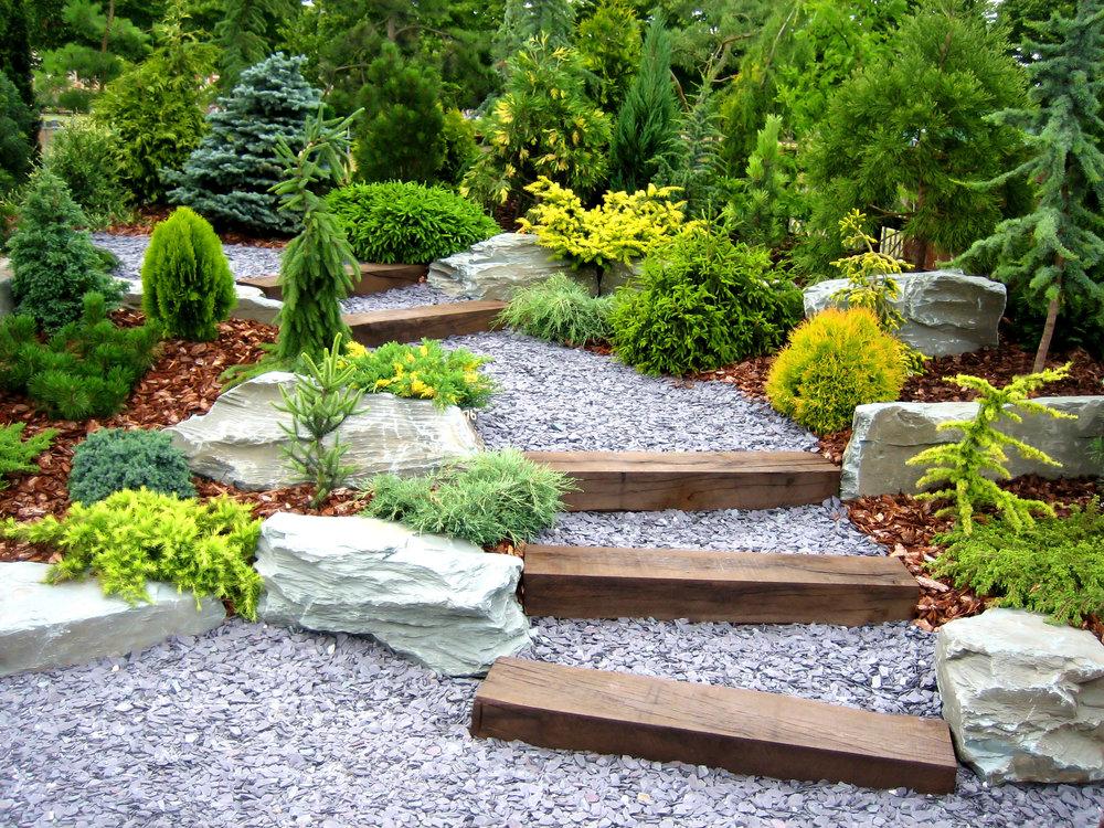 Planting manicured evergreen defined zen garden