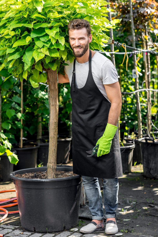 plant garden center tree design specimen