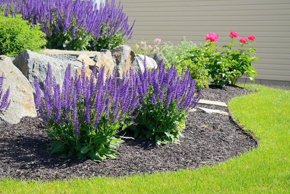plantings salvia rose mulch edging.jpeg
