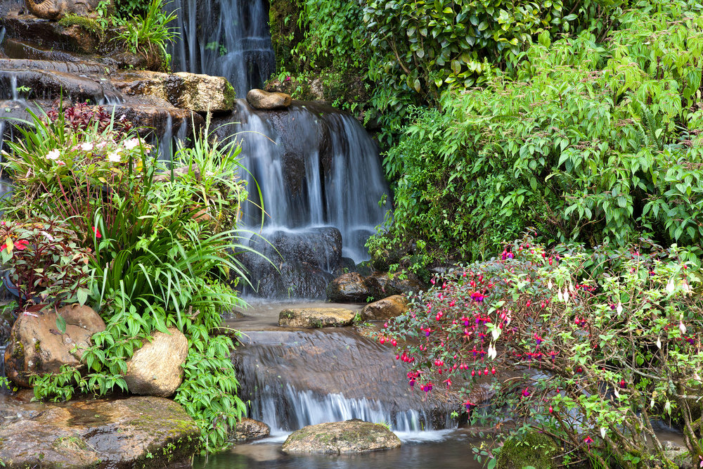 waterfall landscape design plantings