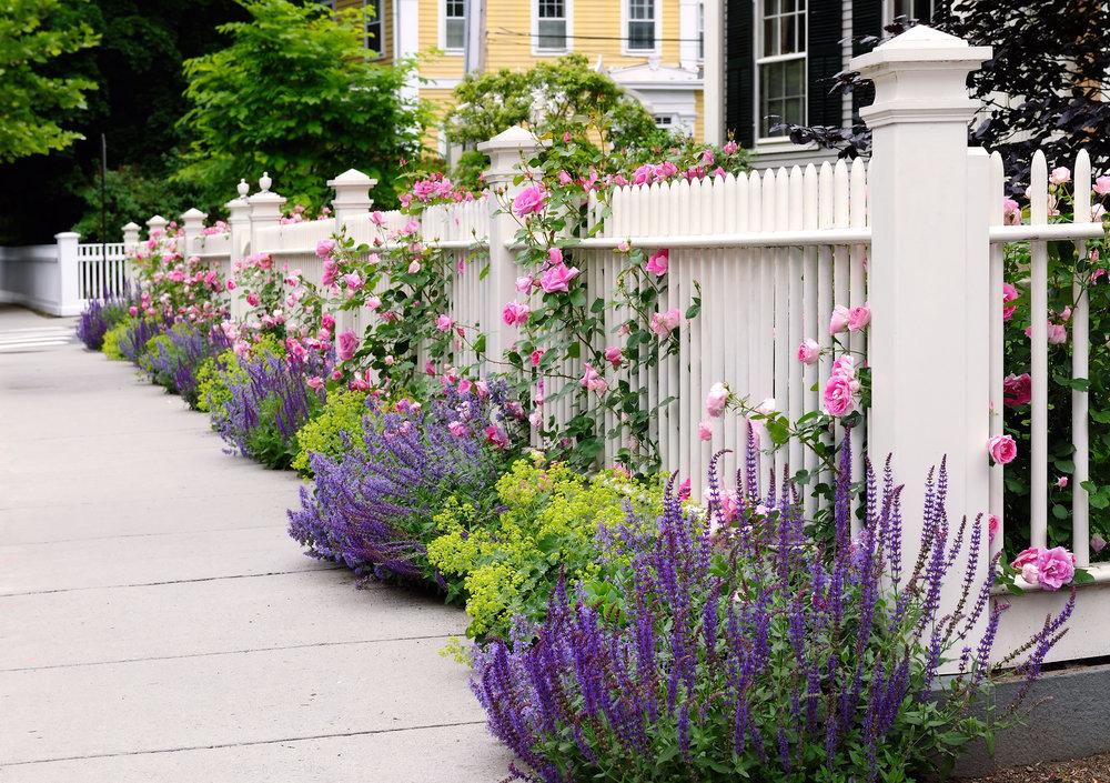 fence plantings white picket landscape design pretty beautiful