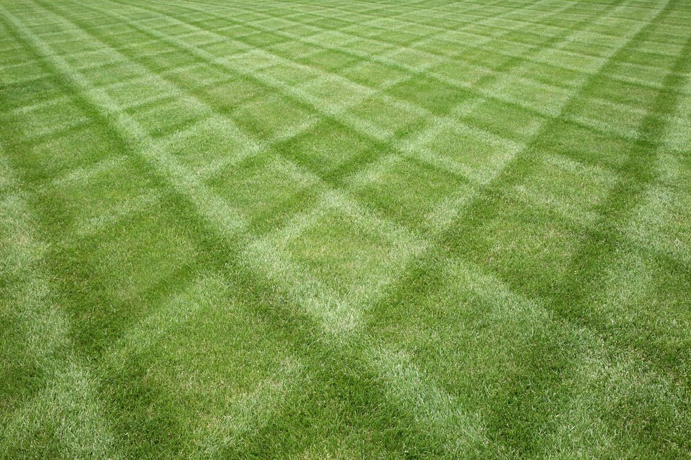 lawn mowing lawn care turf care clean green grass reduced.jpg