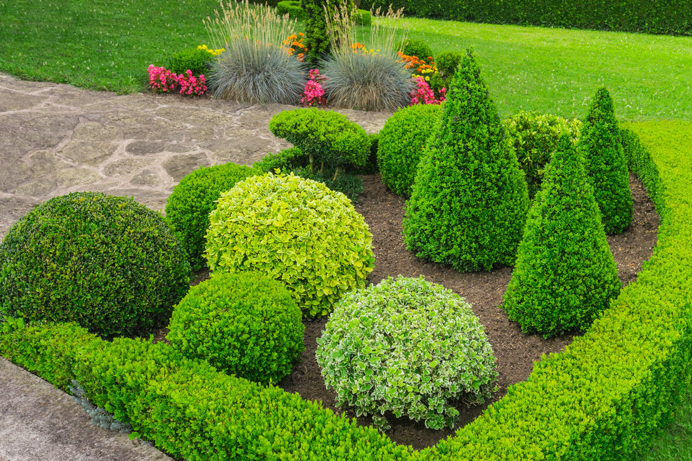 landscape bed maintenance prune pruned clean bed mulch