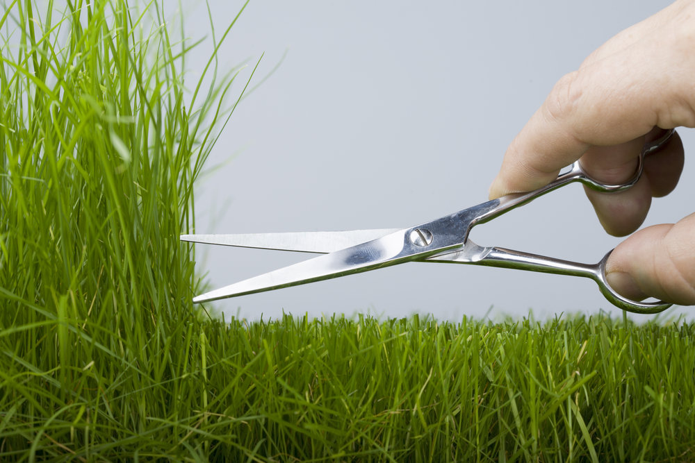 Lawn Scissors service mowing.jpg