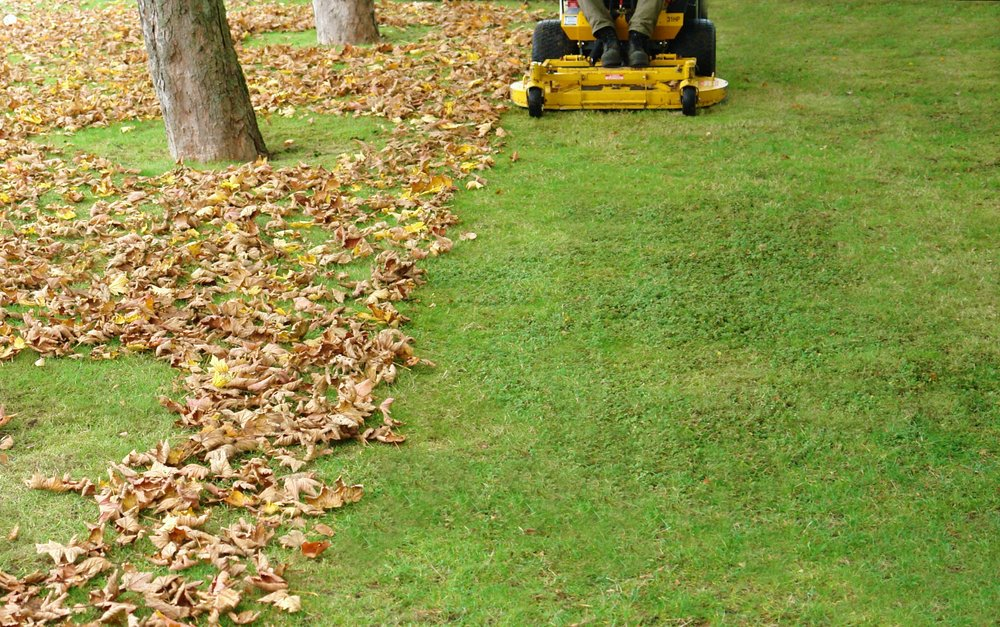 fall cleanup leaf pickup lawn mowing