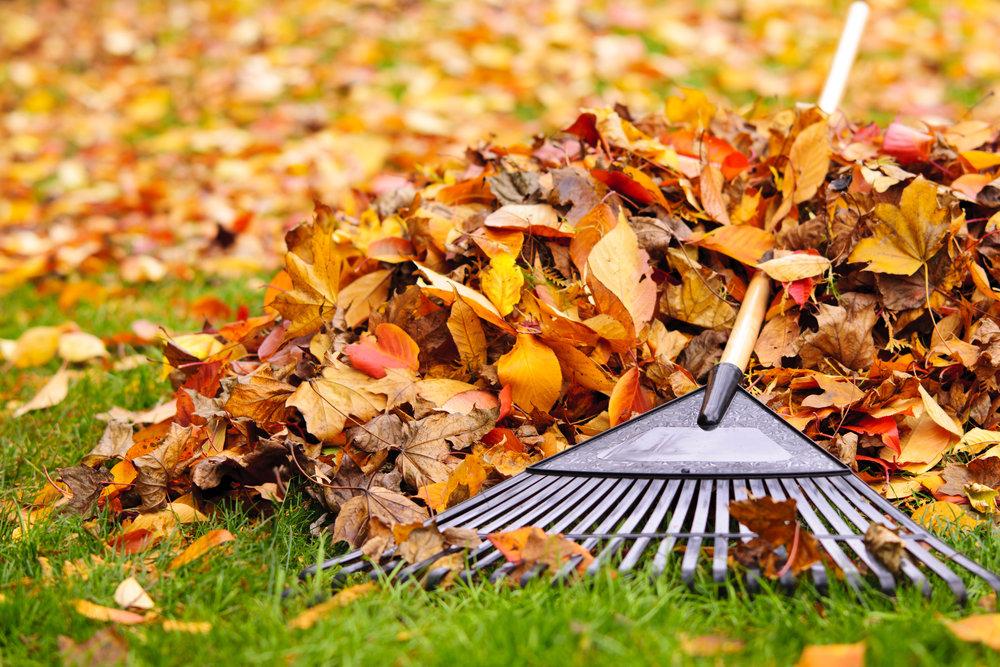 raking fall cleanup foliage leaf pickup