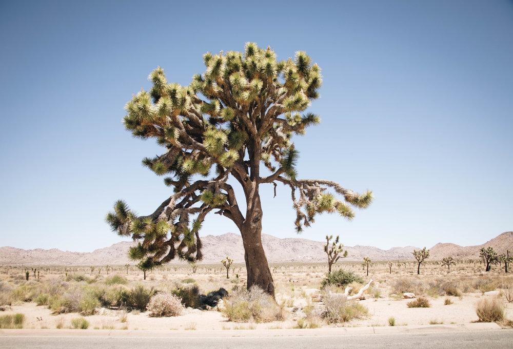 j-tree-58.jpg