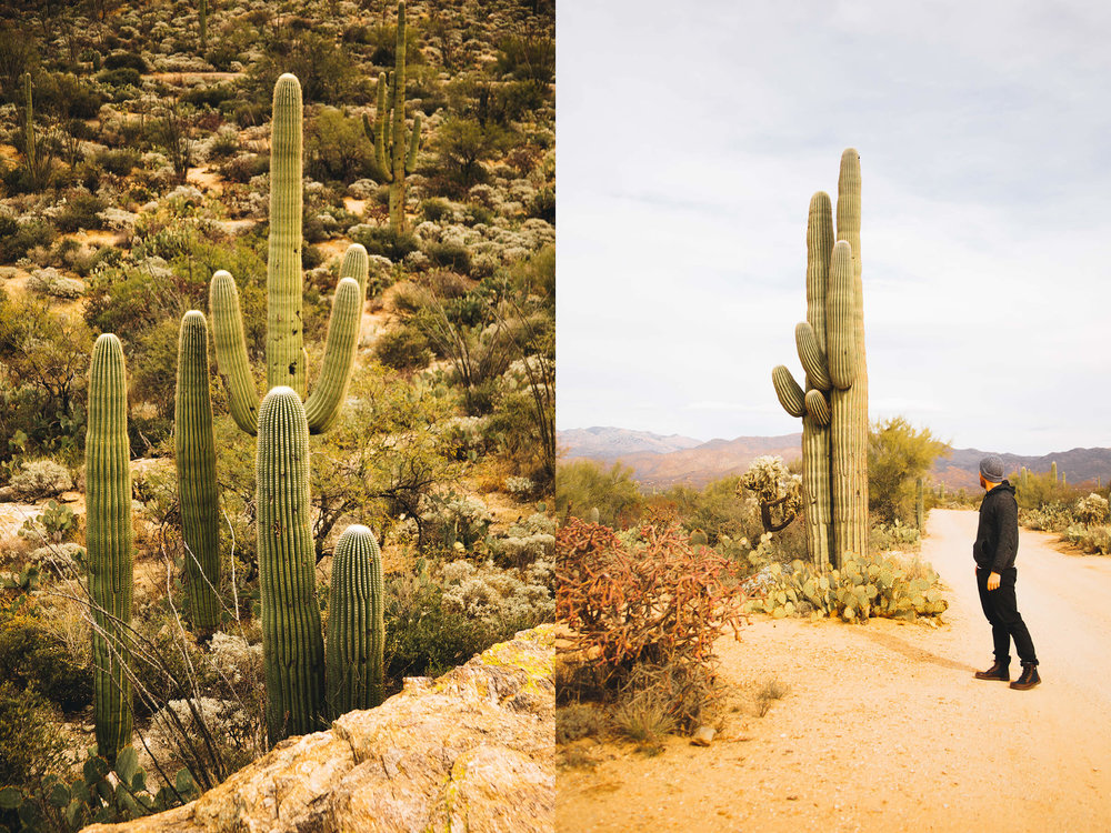 saguaro-1.jpg