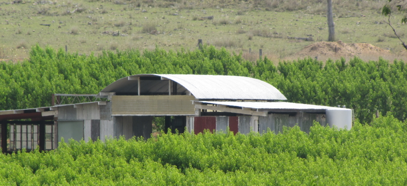 "Image of the ""Old Beltana Packing Shed"" on Rosemary Hill"