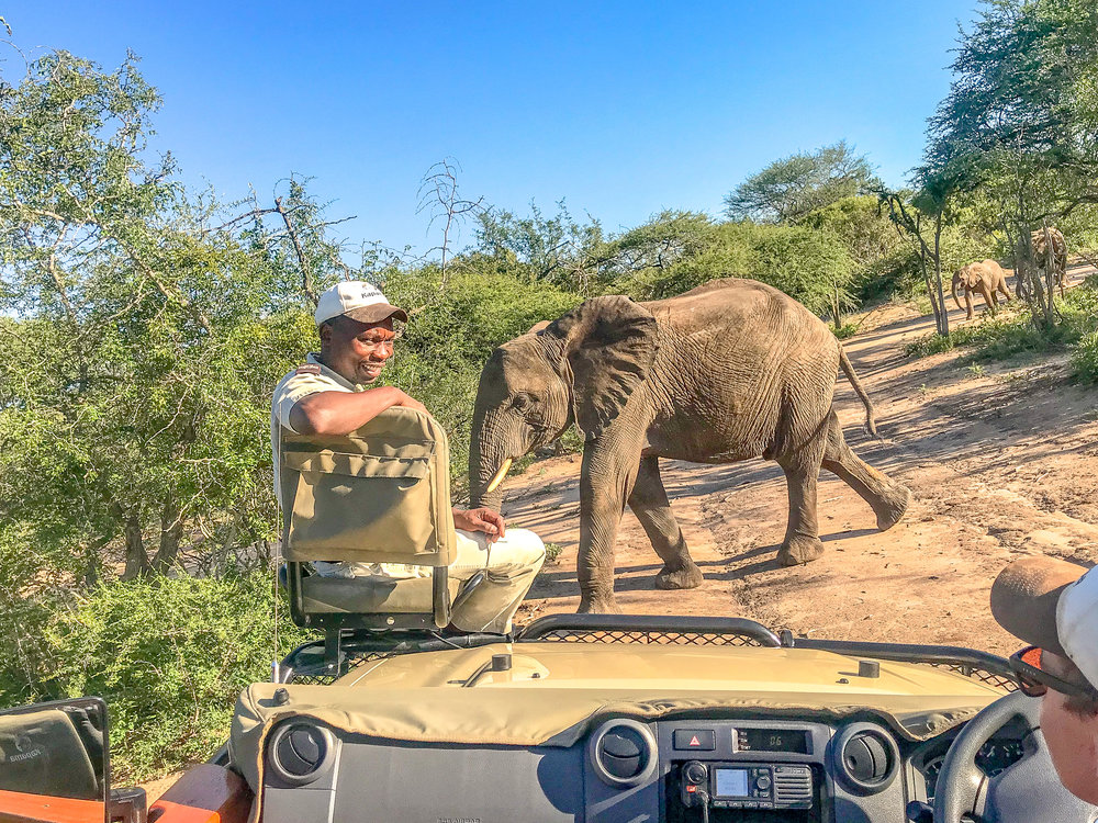 Tipping on a Safari: Everything you Need to Know about Safari Gratuity | coupleinthekitchen.com