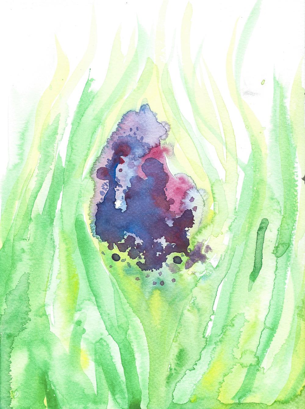 Iris Garden Splash.JPG