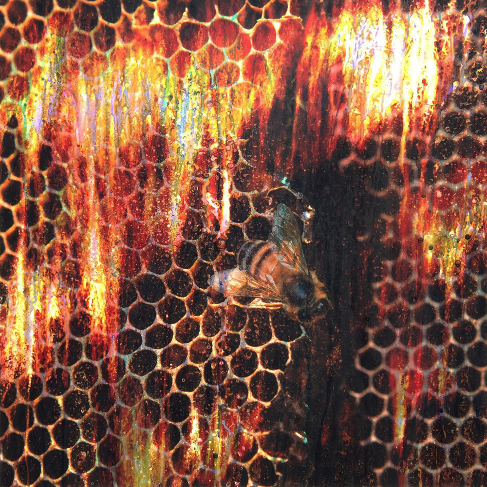 Bee and Empty Honeycomb