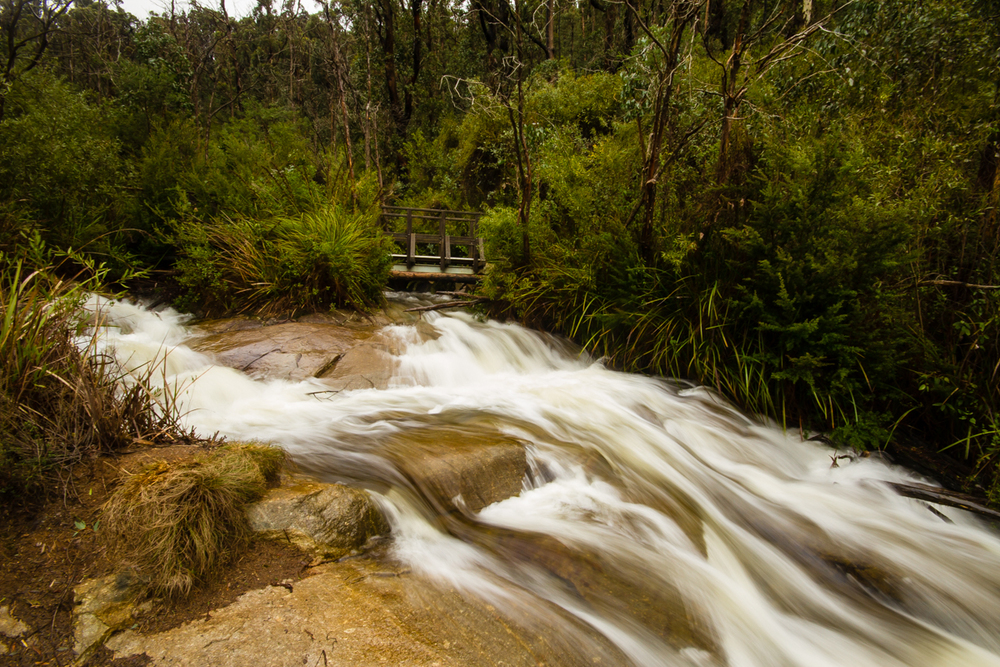 The top of Steavenson Falls