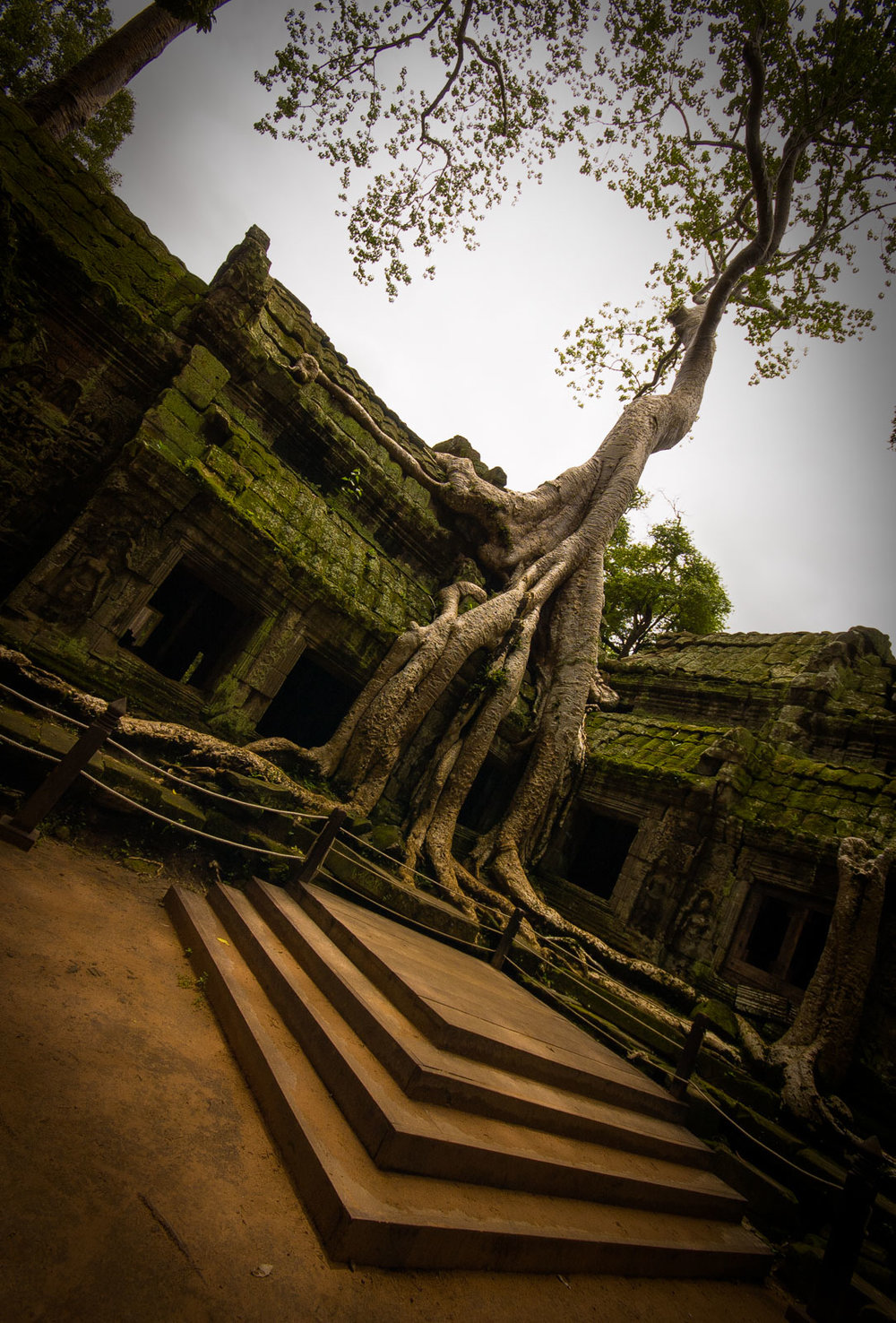 Ta Prohm, being swallowed up slowly by a silk cotton tree