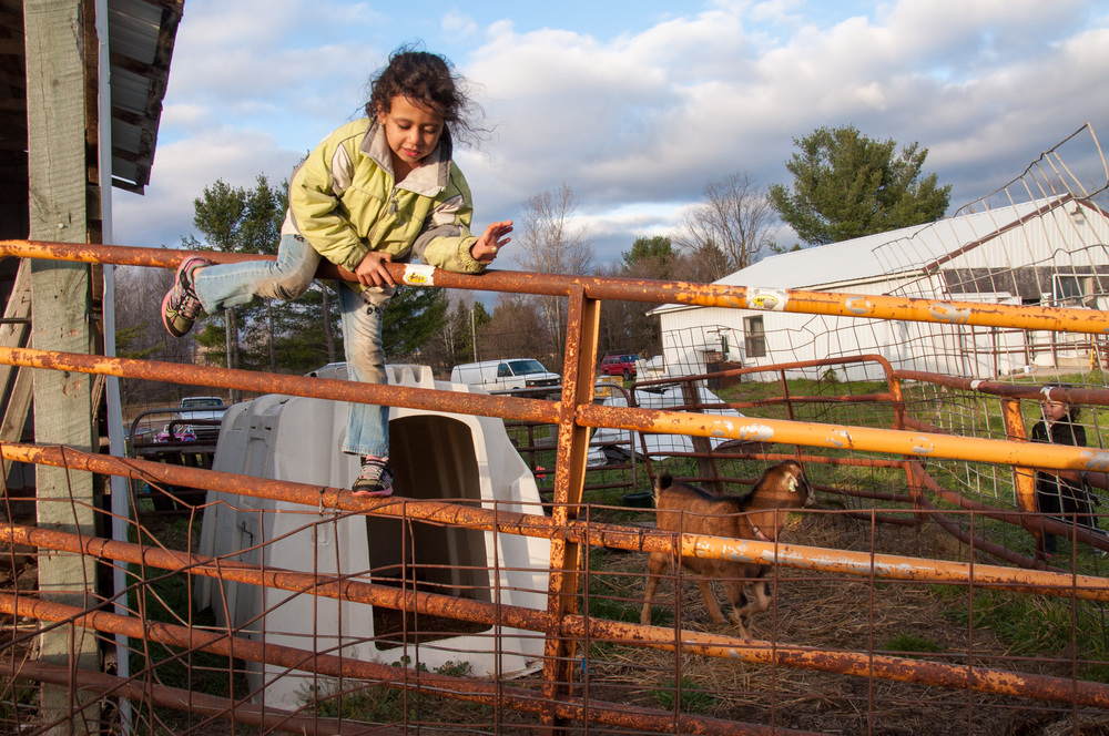 Nathalia Vera, 6, climbs back over the fence after petting and running around with the pet. The goat began to jump and stomp at the kids, so she decided she needed to get out of his home.