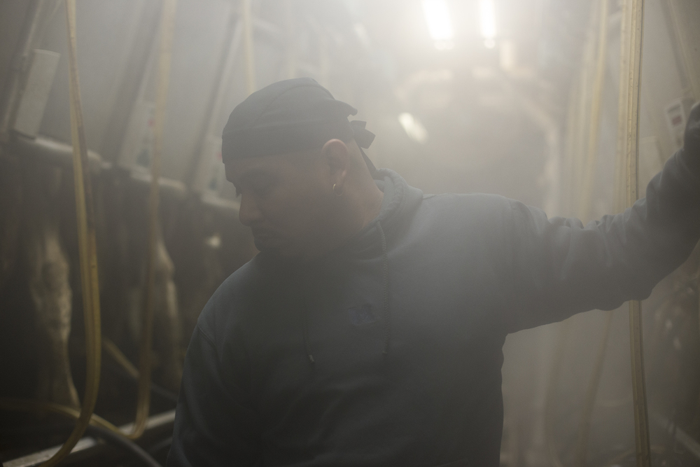 "Billamar, 34, pushes to release a milker from a cow in the parlor at 4:30 a.m. ""I wake up at two every morning, drink some coffee and come to work. It isn't too hard because I go to bed at seven or eight every night. Working here on the farm is okay, it is work. I came to Michigan because my sister was working here with her boyfriend. Maybe next year I will move on again and find a different job,"" said Billamar at the end of his milking shift."