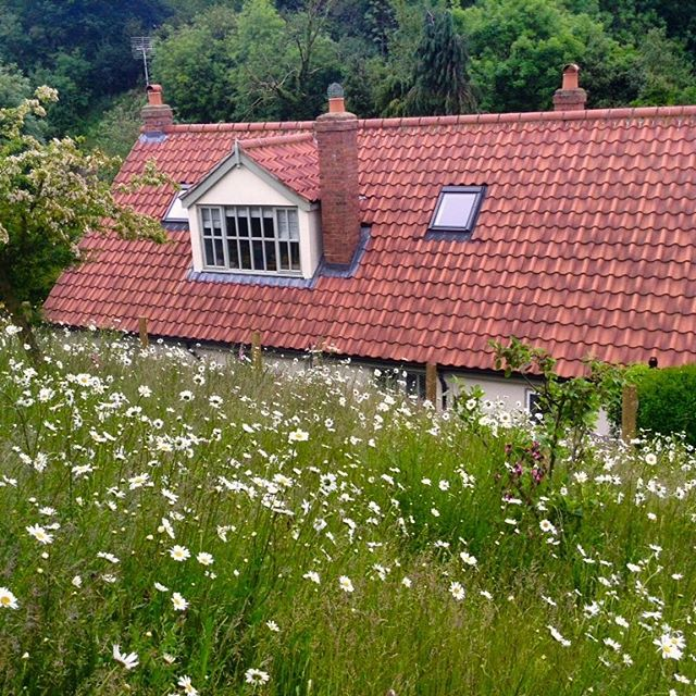 Wildflower meadow. Part of the planting scheme for this country cottage hillside location on the North York moors🇬🇧 #garden #wildflowers #meadow #gardendesign #flowers #daisies #landscapedesign