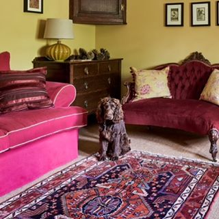 A chocolate Sprocker Spaniel sits in colourful interior. #sprockers #spaniel #cottagestyle #interiorstyling #interiordesign #instacocker #interiordecor #interiors