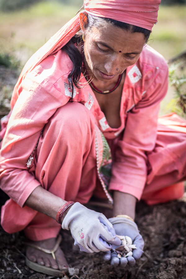 Pushkpa Thakur, groundskeeper at the Dharmalaya Institute, demonstrating how to plant garlic.