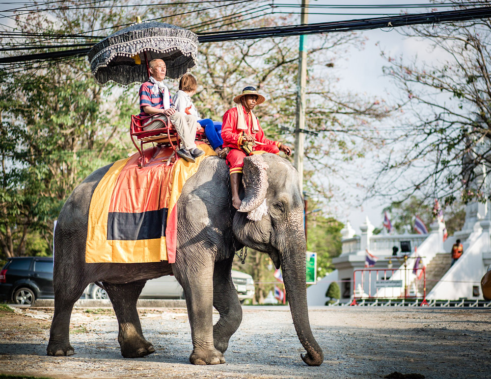 Tourists can take short elephant rides around the city center.