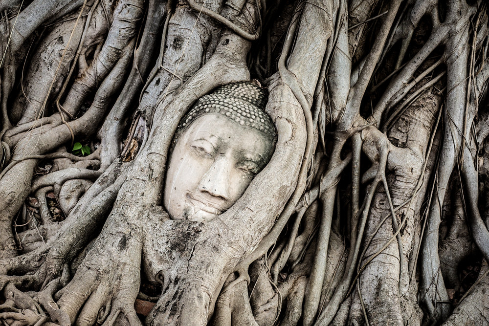 A Buddha statue entwined in a Bodhi tree's roots at Wat Maha That in Ayuthaya.