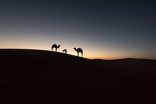 Photographer: Iñigo Echenique @allthesehumans . Rajasthan, India #travel #allthesehumans #desert #camel #india #rajasthan
