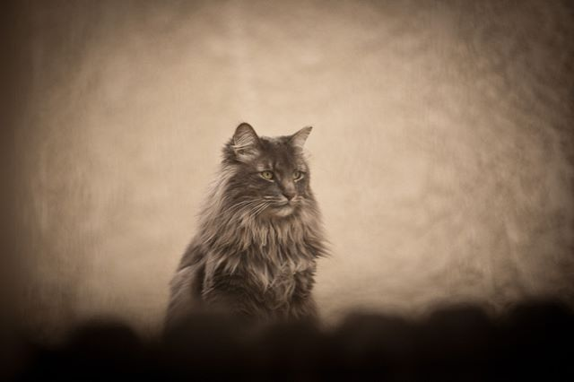 #cat #aow #photography #vintage