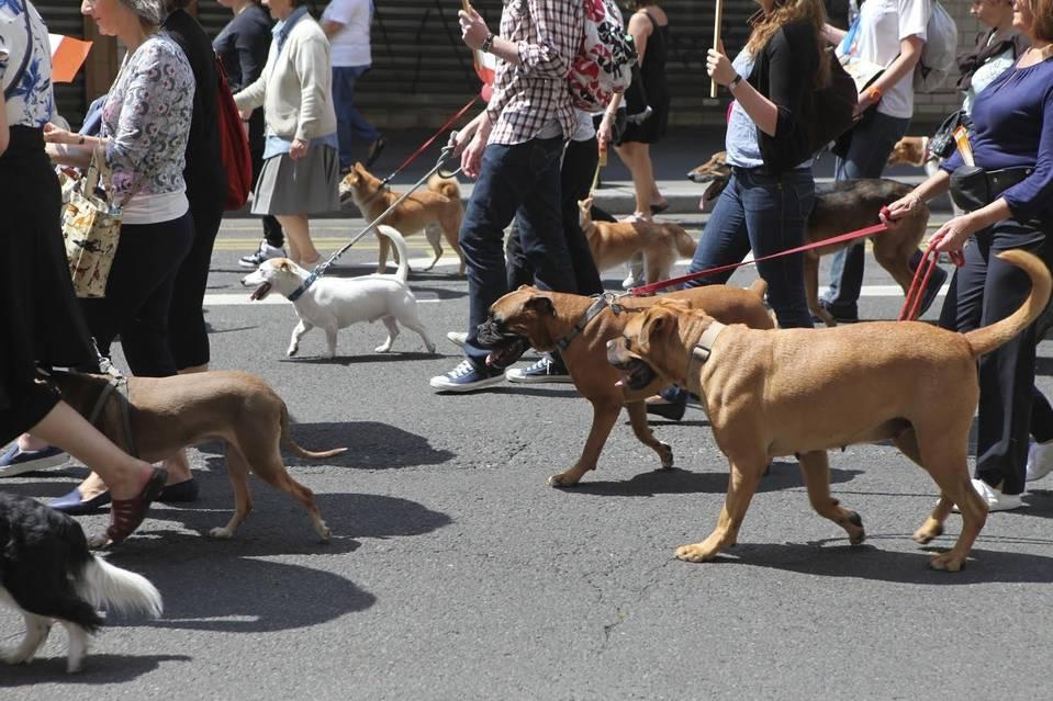 Soccer Tournament Has the Poodles of Paris Feeling Put Out --Paris