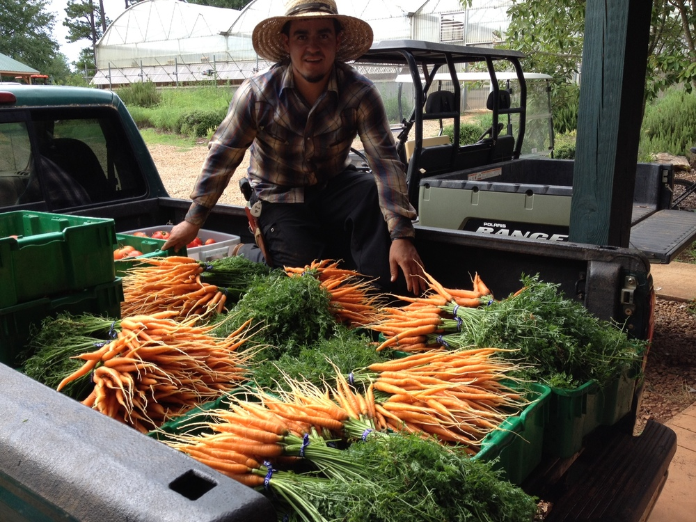 Orlando with Carrots July 2012
