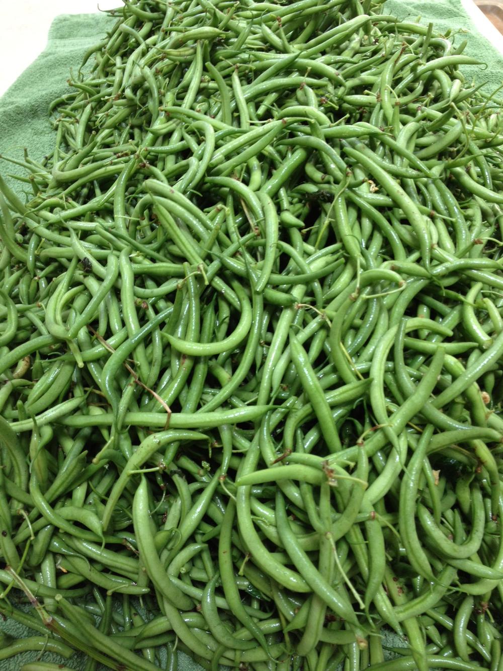 Beans AUG 2012