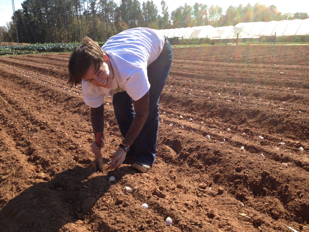 Garlic-Planting-2012-Emily.jpg